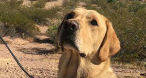 "NATION – The votes are in! TSA's ""cutest K9"" is PHX's Alfie. Muk, Figor, and Donna Demand Recount"